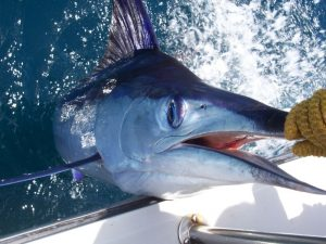 Deep Sea Fishing Cruise in Cabo San Lucas